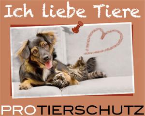 Ich liebe Tiere | PRO TIERSCHUTZ