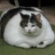 Adipositas: Übergewicht bei Hund und Katze (2)