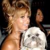 Beyonce vergisst ihren Hund