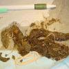 Parasiten bei Haustieren: Würmer