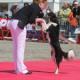 Dogdance - Teamsport für Hund und Mensch