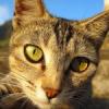 Der Sehsinn der Katze