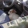 Mit Bello in den Urlaub: Todesfalle Auto