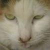 Streunerkatzen-Kastrationsprojekt im Burgenland