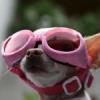 Trend: Sonnenbrillen für den Hund