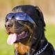Sonnenbrillen für den Hund
