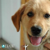 Hundeschicksal in China heute: Luxusgrab oder Kochtopf