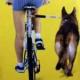 Radfahren mit Hund