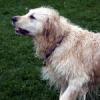 Entwicklungsstadien des Hundes