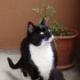 Katzen aus dem Tierheim: Problemkatzen ???