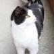 Unkontrollierte Katzenvermehrung