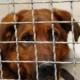 Gerettet aus der Hundehölle in Apulien