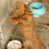 Hundehölle Apulien: Eine Schande für Europa