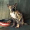 Tierschutzstrafpraxis 2008 in der Schweiz