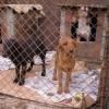 Straßenhunde: Tierschutz ist ein europäisches Anliegen