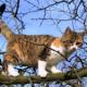 Weidmanns Heil - Renitenter Jäger nach Schuss auf Katze ausgeforscht