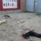 Massentötung von Hunden anläßlich des chinesischen Nationalfeiertages