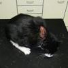 Versuchter Katzenmord eines Jägers - Verfahren wegen Tierquälerei eingestellt