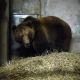 Zwischenfall im Bärenpark Bern: Chancen von Bär Finn steigen