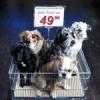 Wühltischwelpen nein Danke! - Kampagne gegen den grausamen Handel mit Hundewelpen