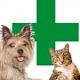 Erste Hilfe bei Hund & Katze: Verbrennung