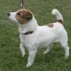 Das Supertalent 2009: Jack Russell Terrier PrimaDonna