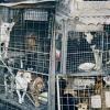 Animalhope Tierhilfe Nitra - Stück für Stück in eine bessere Zukunft