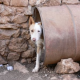 Auch Tiere brauchen Rechtsbeistand: Volksabstimmung über Tierschutzanwalt in der Schweiz