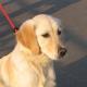 Im Eis eingebrochen: durch Böller verschreckter Hund gerettet