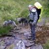 Dogtrekking - Hundesport für Naturliebhaber