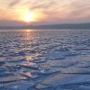 Hund auf hoher See von Eisscholle gerettet