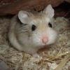 Unfassbar: Mutter zwingt Sohn wegen schlechter Schulnoten eigenen Hamster mit Hammer zu töten