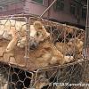 China will Hunde von der Speisekarte verbannen