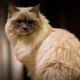 Matilda, die Katze im Algonquin Hotel