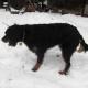 Pfotenpflege schützt Hunde bei Eis und Schnee