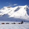 Tierisch gute Erlebnisse: Husky Abenteuer in der Schweiz