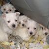 Polizei stoppte Hundewelpentransport - Tierquäler auf freiem Fuß angezeigt