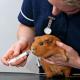 Kaninchen: Wer macht Tests auf Dauerschnupfen? (815)