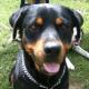 Die richtige Hundeerziehung braucht Liebe, Ausdauer und die nötige Konsequenz