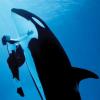 Seaworld Orlando: Orcabulle