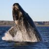 Mutigen Greenpeace-Kämpfern gegen den japanischen Walfang drohen 10 Jahre Haft