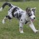 Impfung - Erfolgreicher Start in ein unbeschwertes Hundeleben