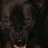 Des Pudels Kern: Warum beißt ein Hund?