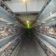 Wiener Neustädter Bürgermeister lässt Hühner weiter in illegalen Käfigen leiden!