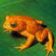 Projekt zum Schutz von Amphibien im Straßenverkehr