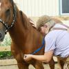 Pferdeinfluenza