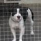 Tierschutzhaus schlägt Alarm: Immer mehr Listenhunde werden abgeschoben