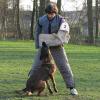 Österreichische Tierärztekammer begrüßt Verbot von Schutzhundesausbildung für private Hundehalter