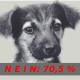 Tieranwalt-Initiative mit großer Mehrheit abgelehnt