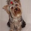 Verpflichtender Hundeführschein für